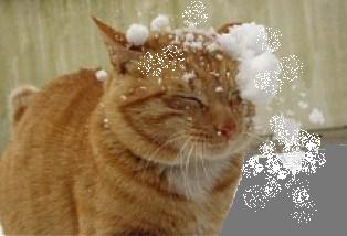 you-suck-cats-snow-funny