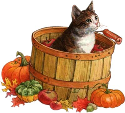 9a69e50aa362614136e15d8f50178639--autumn-animals-my-animal