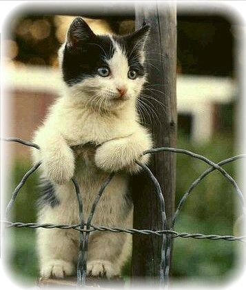 5a16131c45e3e1356c960c0ced3bb699--cute-kittens-cute-pets