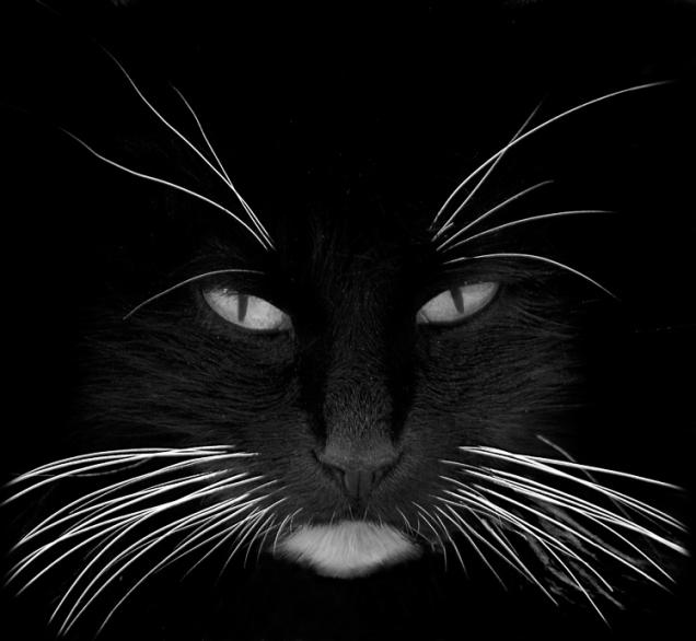 black_cat_white_whiskers