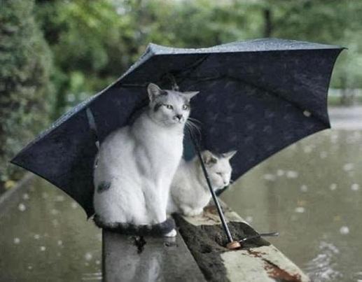 Funny cats: Cat in the rain