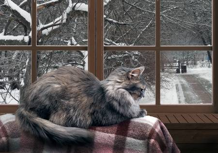 61500347-cat-on-the-balcony-at-the-window-outside-the-window-snow-winter-trees-in-the-park-cat-large-gray-fur